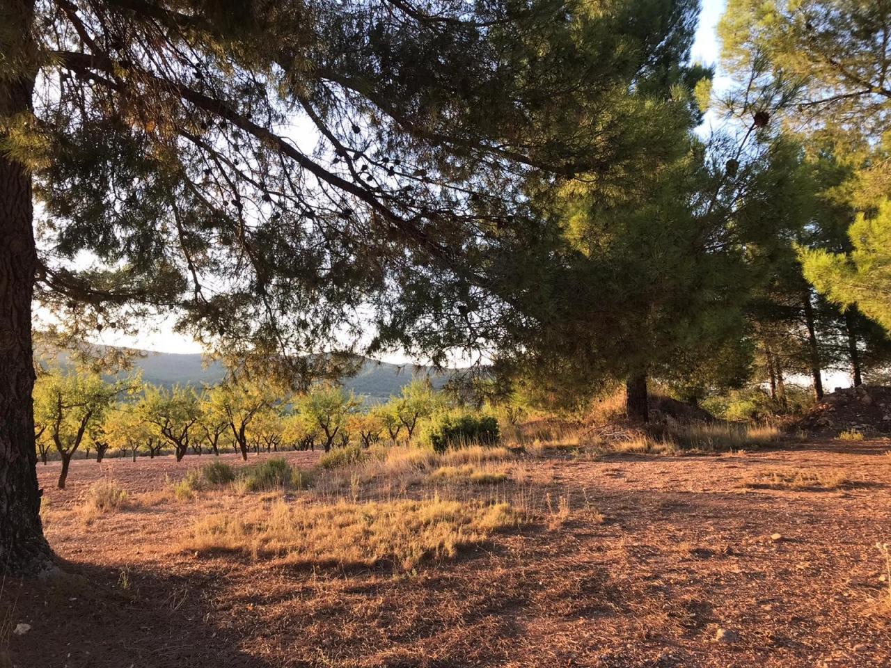Terreno secano La Perihuela
